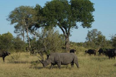 Expeditiereis Malawi