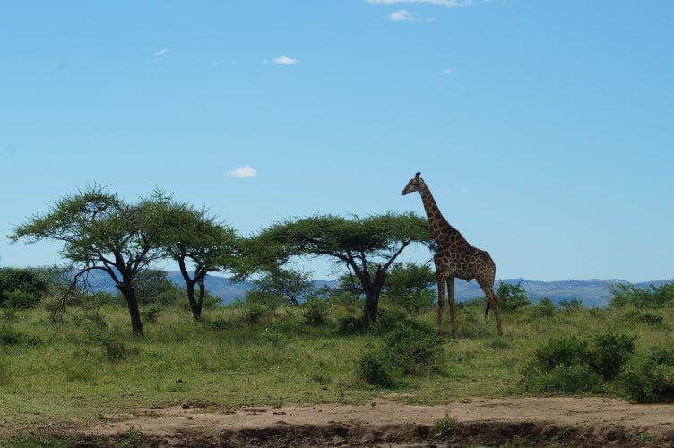 Studiereis Malawi